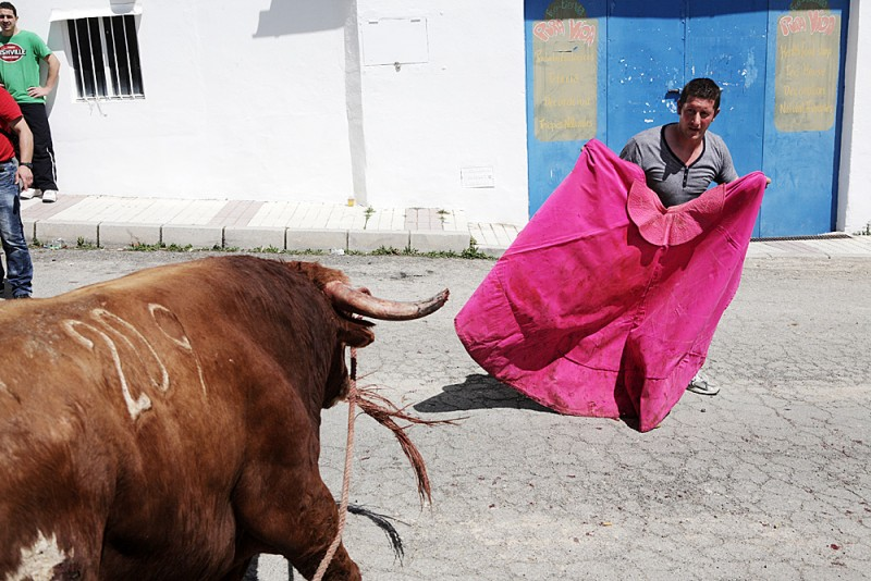 Running of the Bulls in Gaucín, Andalucía, Spain